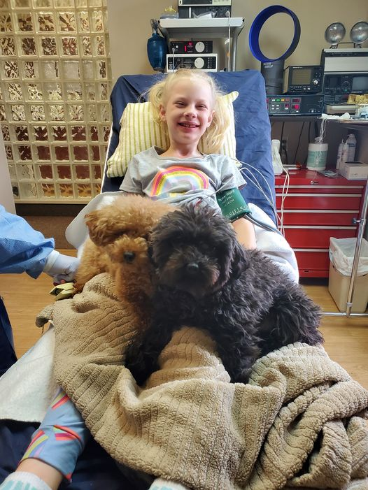 dental therapy dogs with child patient