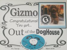 IT'S OFFICIAL: Meet Dogtor Gizmo!