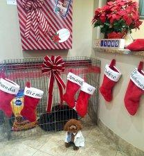 Gizmo's Giving Corner