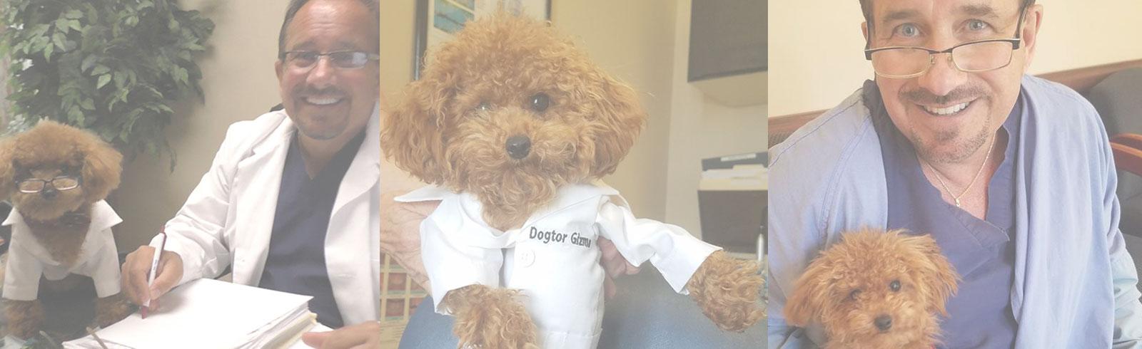Meet Dogtor Gizmo!